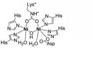 nitrocomplex1